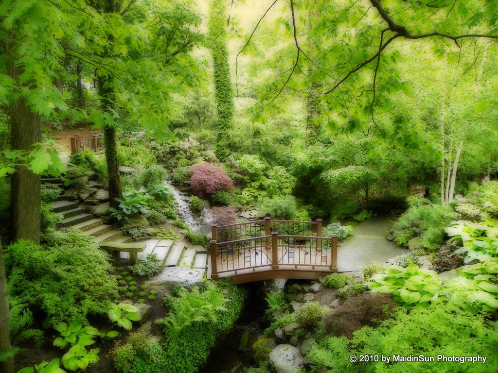 Japanese Garden Life In The Bogs