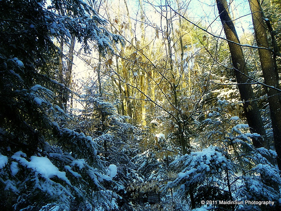 Image Result For Days Of Winter