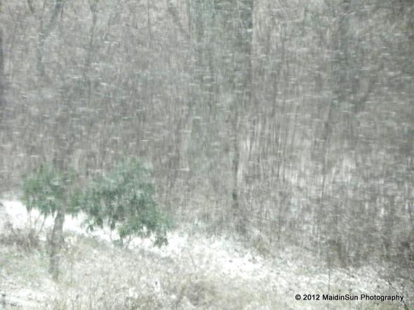 Winter Solstice II