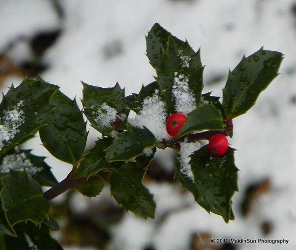 December 2012 008a