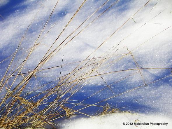 Grass and glitter