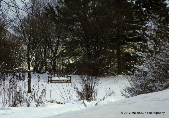 Winter at the Holden Arboretum