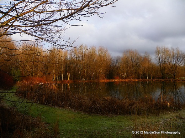 Around the corner from where I stood to watch the deer, we have today's view of the pond.