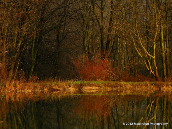 A little reflections