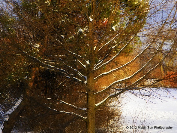 December 2012 027a