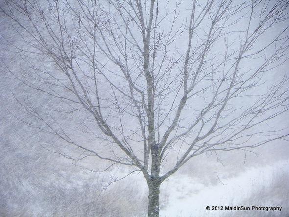 December 2012 036a