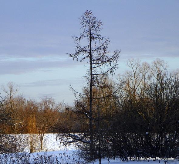 December 2012 037a