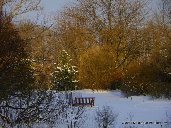 A bench in winter