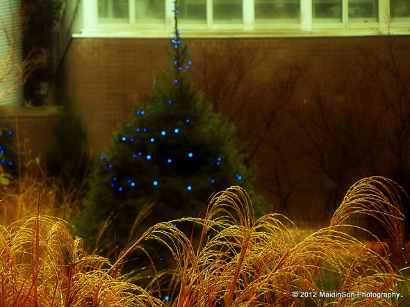 Christmas in the background.  Franklin Park Conservatory.
