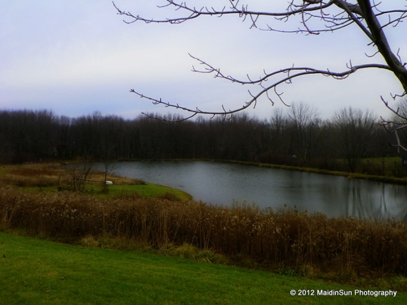 Today's view of the pond.  Winter is coming...