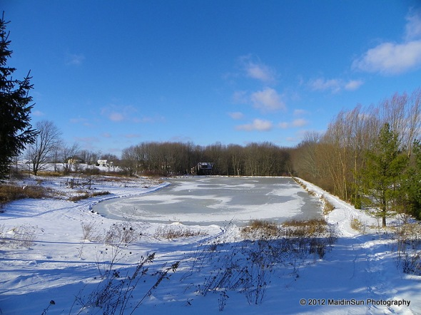 Yesterday's view of the pond