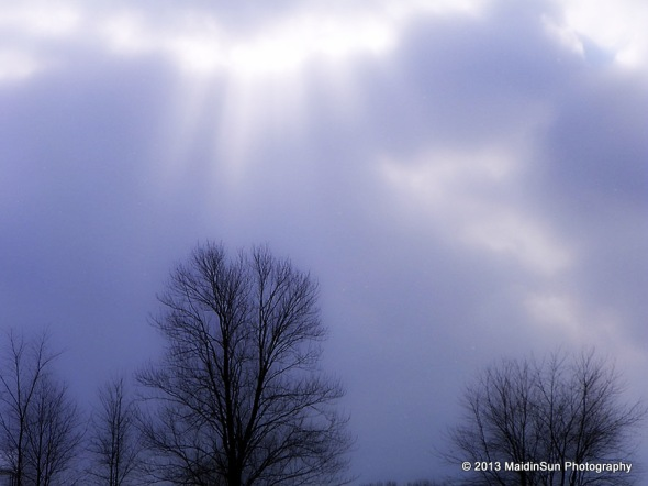 Tree and sunbeams, reaching towards each other.
