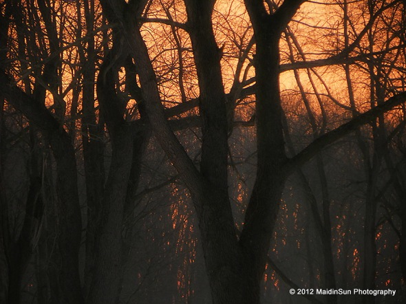 Misty woods at sunrise