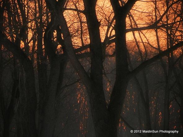 Misty woods at sunrise