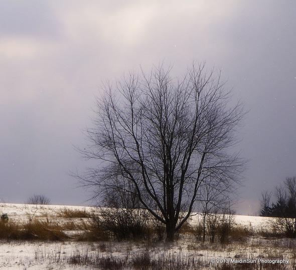 January 2013 025a