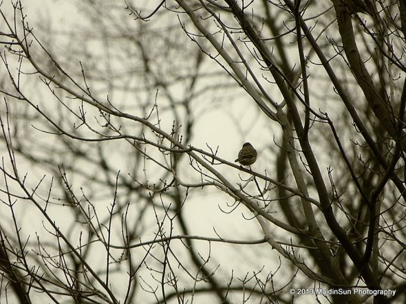 A sparrow watches for the rain
