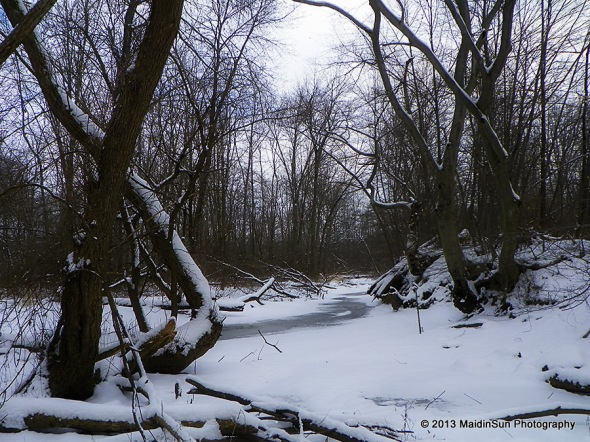 The creek in the woods on Saturday