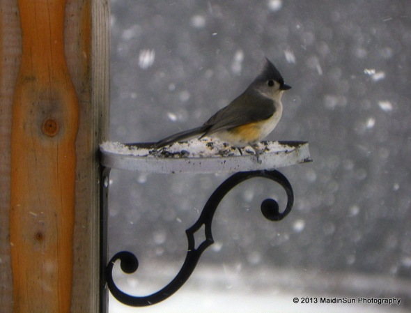 A new visitor to the feeder.