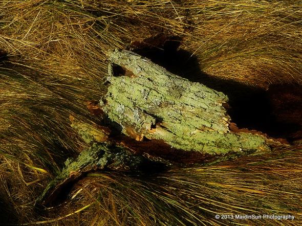 Skin.  (Bark from a dead elm tree.)