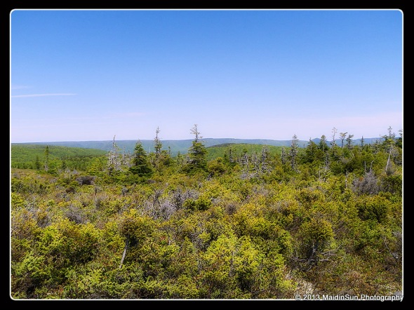(8 June 2012.  Glasgow Lakes Look-Off Trail.  Cape Breton Highlands National Park, Nova Scotia.)