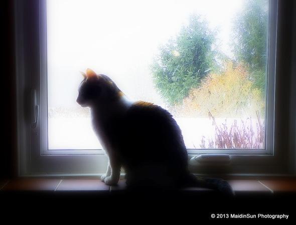 Bella at the window