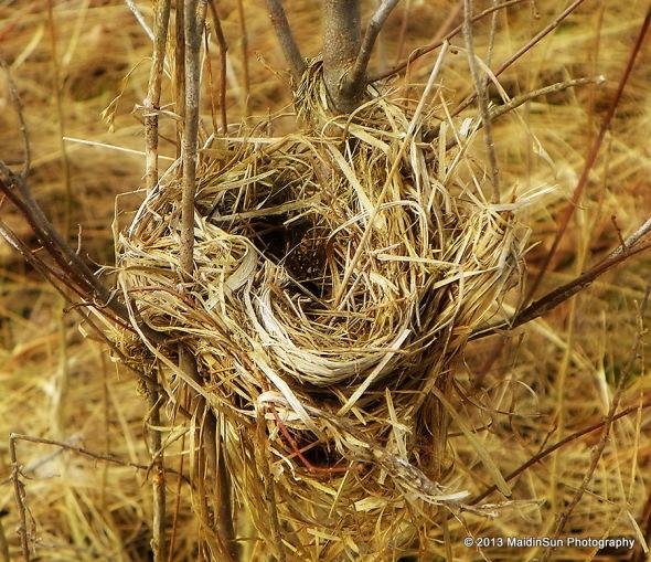 An empty nest