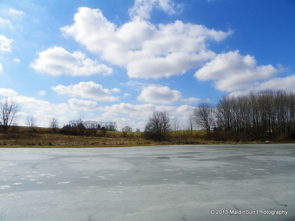 Today's view of the pond