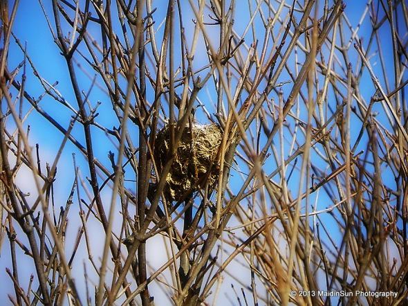A nest high up in a tree