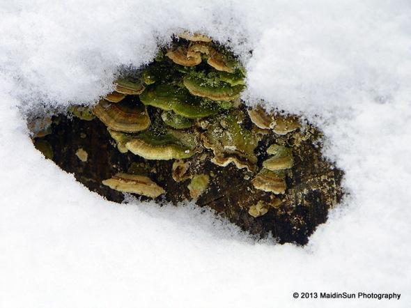 A glimpse of fungi
