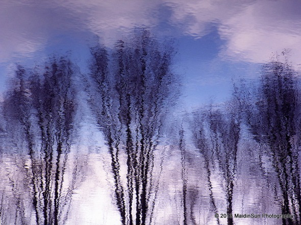 Late winter reflections