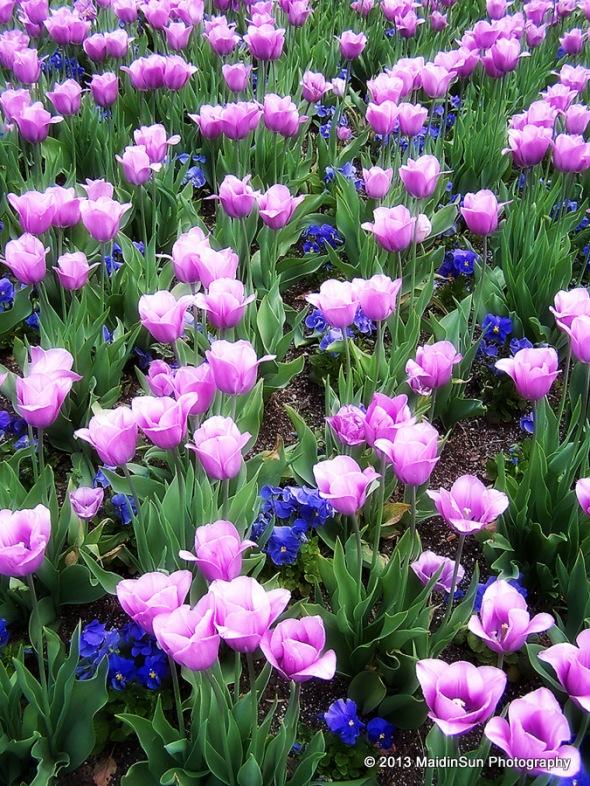 Longwood Gardens 0507 016a