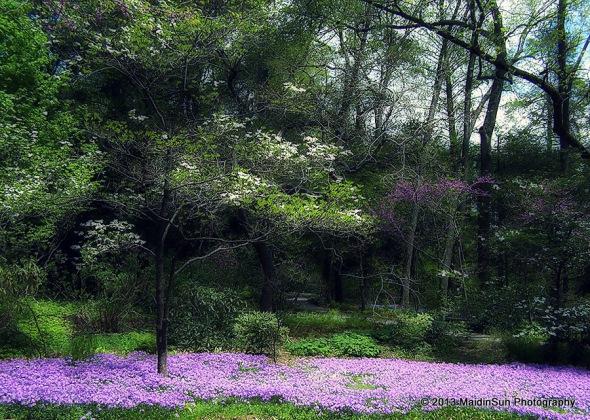 Longwood Gardens 0507 043a