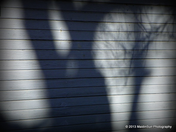 Shadows dancing on the side of the barn