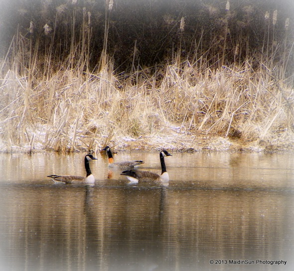 A waterfowl morning