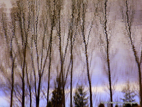 Willows and pines