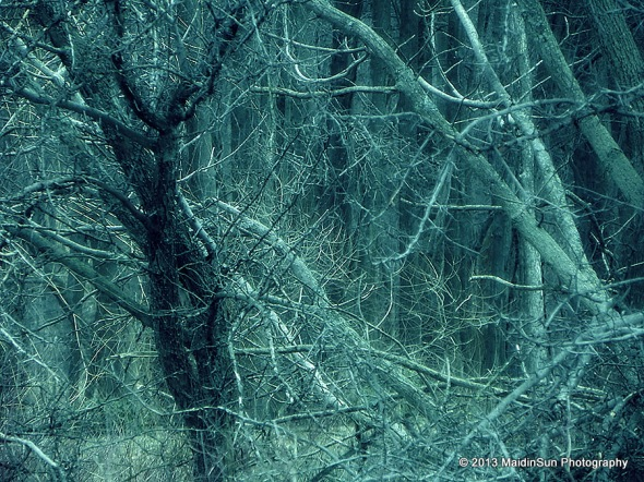 A tangle of branches in the fairy tale woods