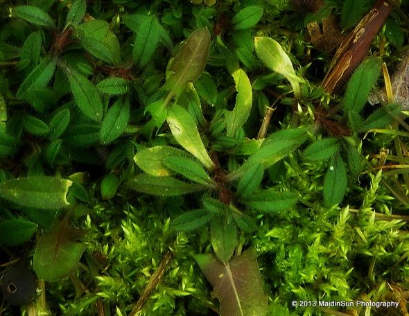 Fuzzy green
