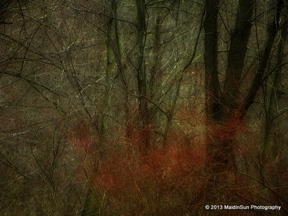 A splash of red in the woods