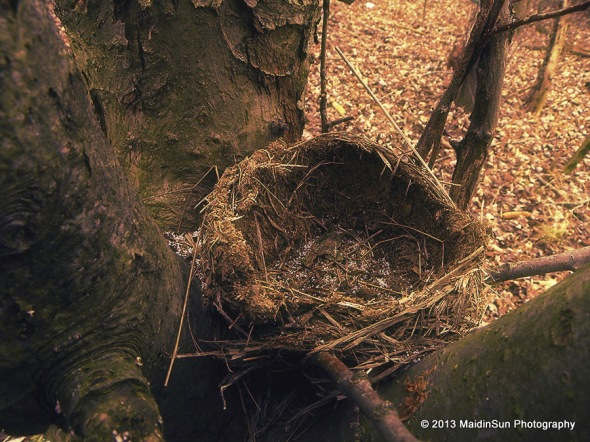 Empty nest in the woods