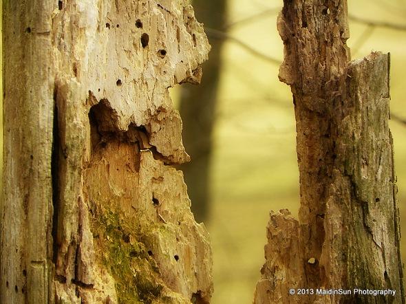 Wabi-sabi tree