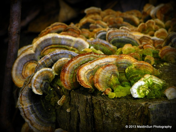 Greens in the colorful fungus growing on a log