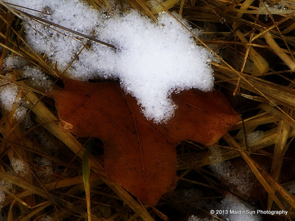 Leaf and snow